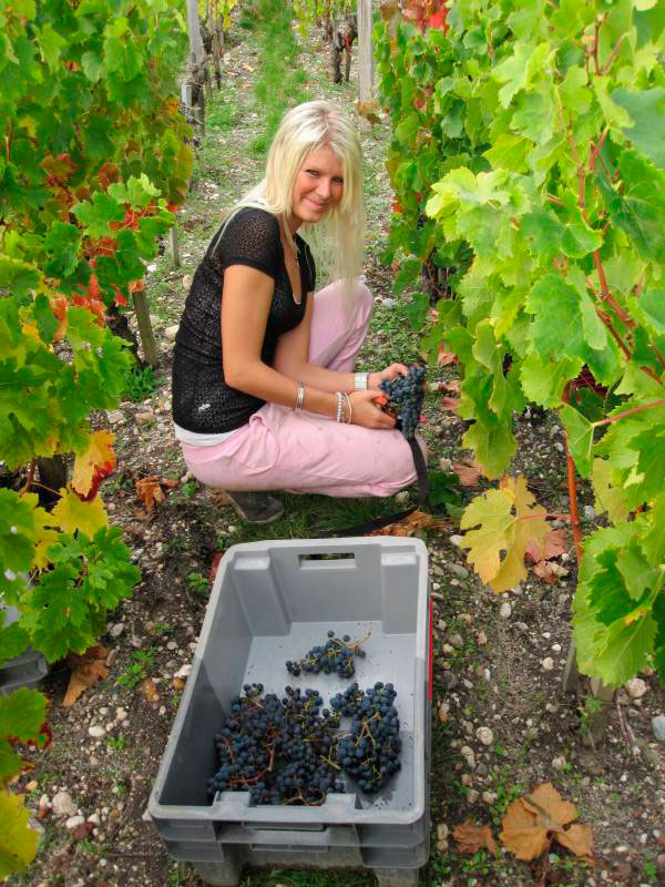 Pretty Danish girl picks grapes at Palmer in September 2010